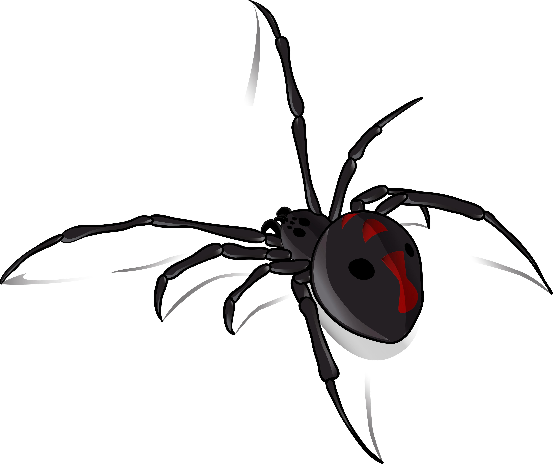 Spider Control - Black widow spider in northern ca